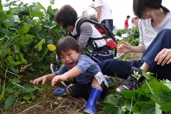 枝豆の収穫を行いました。