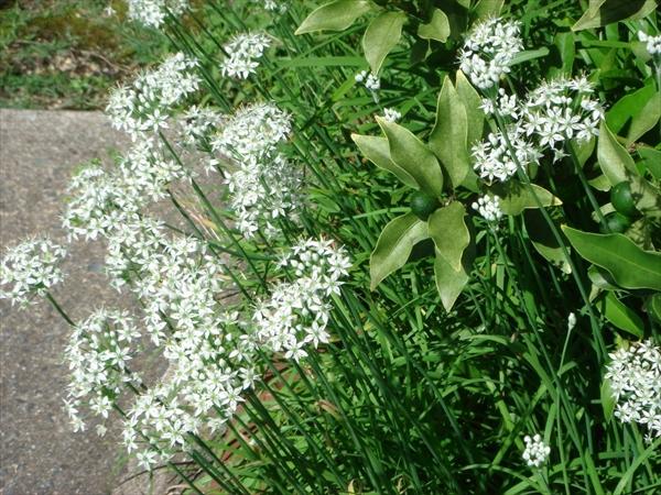 第378回庭の草引き